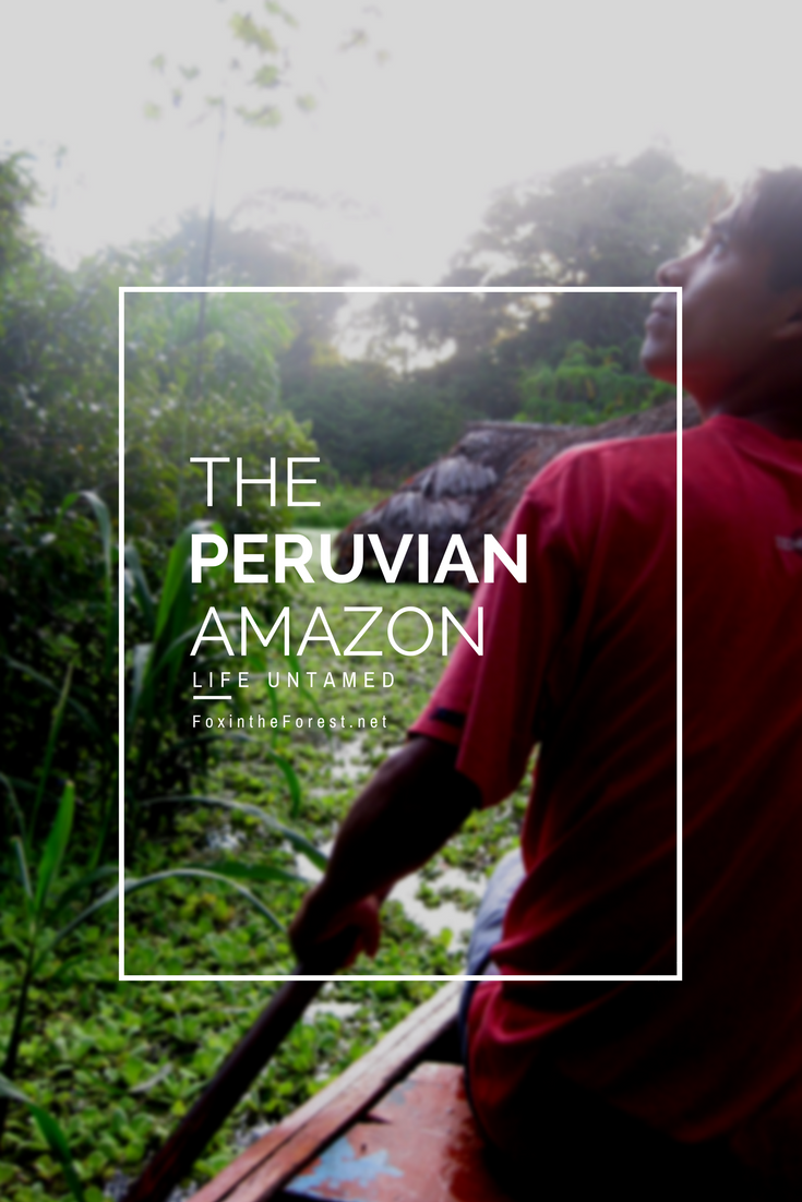 Looking to travel to the Peruvian Amazon? Read about life in the jungle. Peru is an amazing spot to discover the Amazon River Basin.