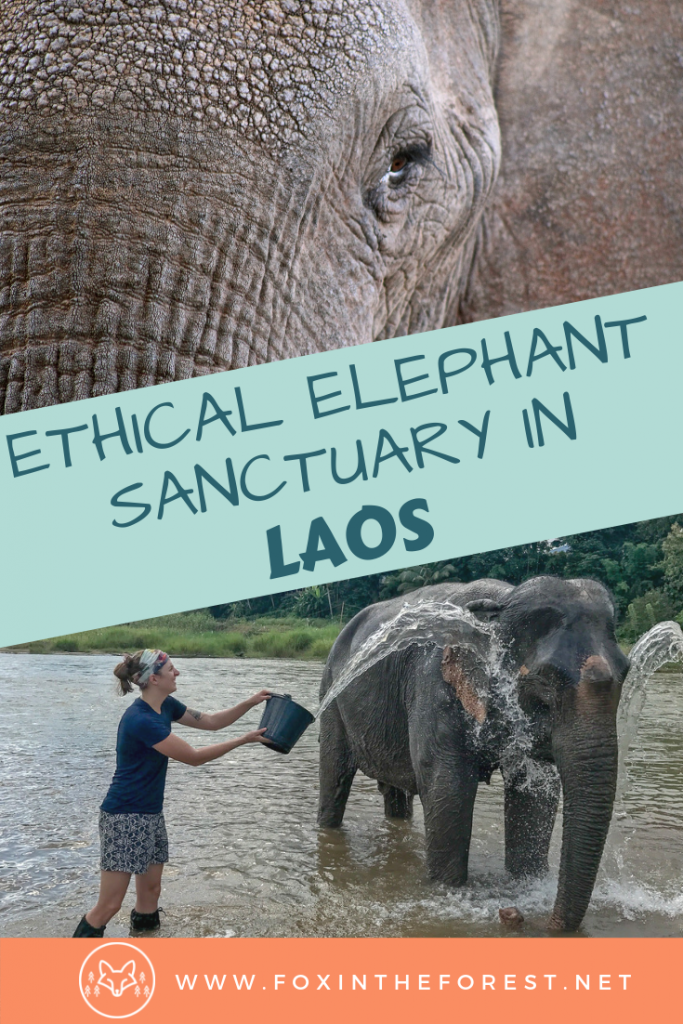 The most ethical elephant sanctuary in Laos. Tips on how to select an ethical elephant sanctuary. Ethical elephant encounters in Luang Prabang, Laos. Choosing an ethical elephant sanctuary. #ethicaltravel #Asia #Laos
