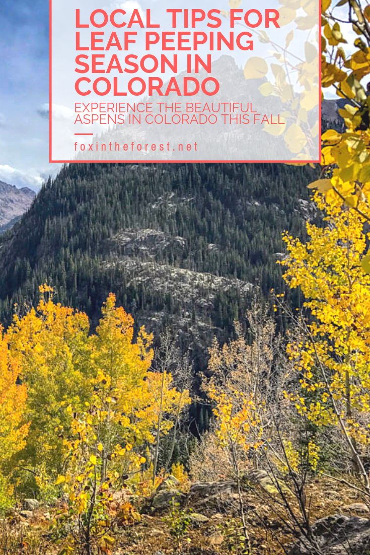 Be prepared for the fall leaf-peeping season in Colorado. Experience the magic of the fall Aspens with insider tips on how to make the most of your time in the Colorado Rockies this fall. Written by a local. #colorado #travel #fallcolors #outdoors