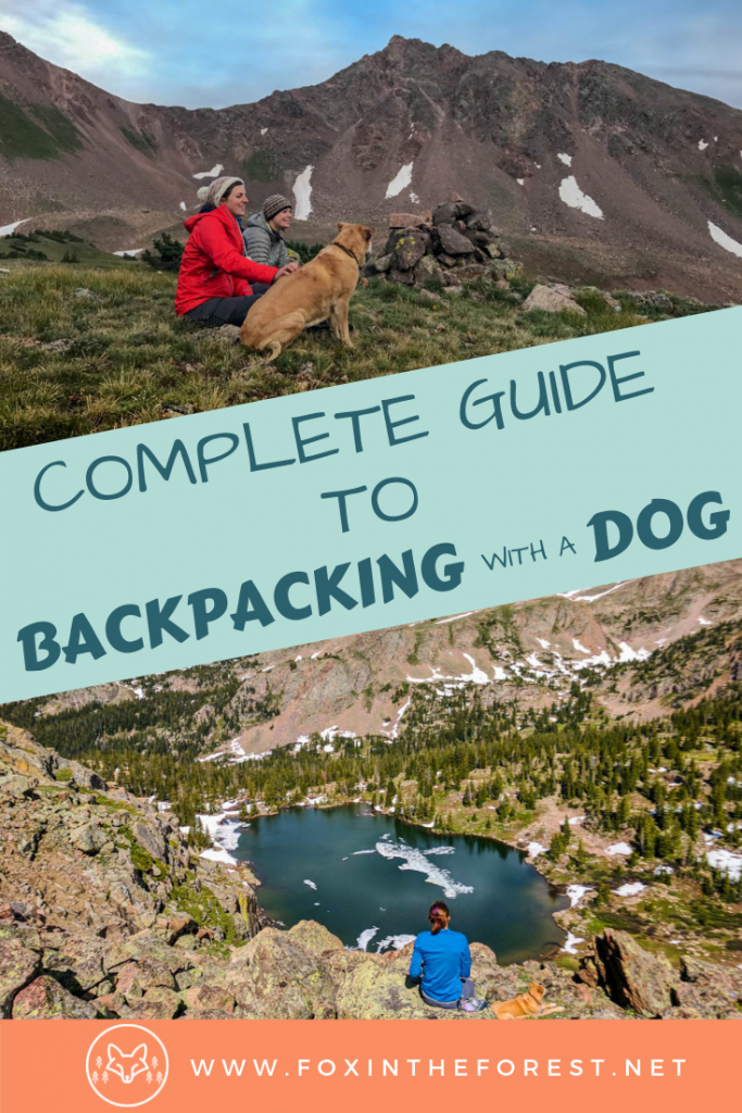 Everything you need to know to go wilderness camping or backpacking with your dog. Tips and tricks for hiking with a dog. Hiking and camping gear for dogs. How to camp with a dog. #dog #outdoors #hiking #camping