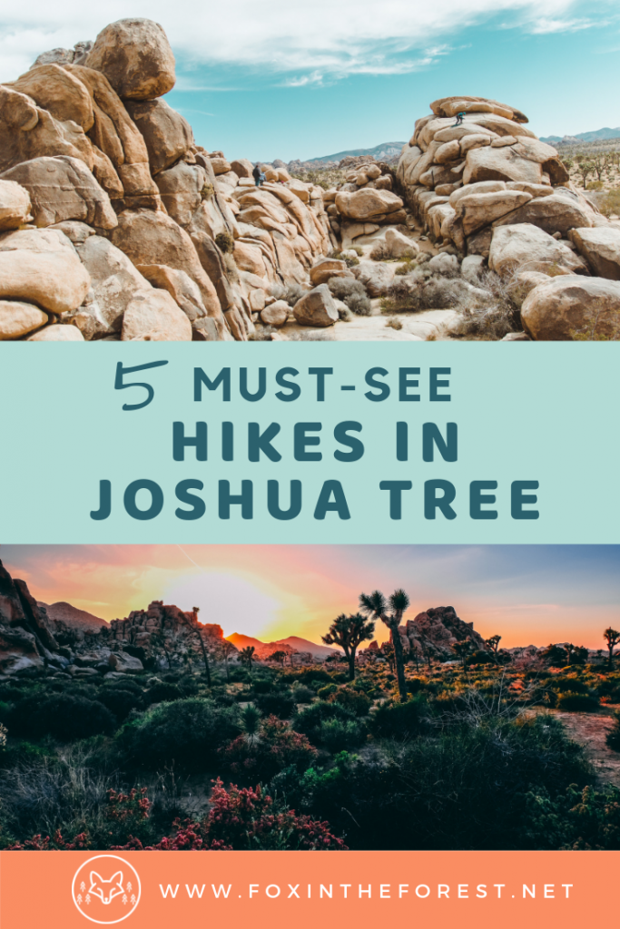 The best hikes in Joshua Tree National Park. Things to do in Joshua Tree. Hiking trails and camping in Joshua Tree National Park. Family-friendly hikes with kids in Joshua Tree. #california #hiking #travel