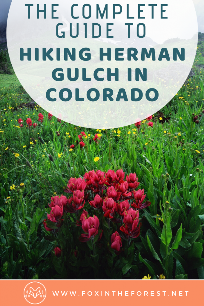 The local guide to how to hike one of the most beautiful wildflower hikes in Colorado. Herman Gulch is a hike near Denver featuring beautiful wildflowers and is one of the best things to do near Denver. #colorado #hiking #travel
