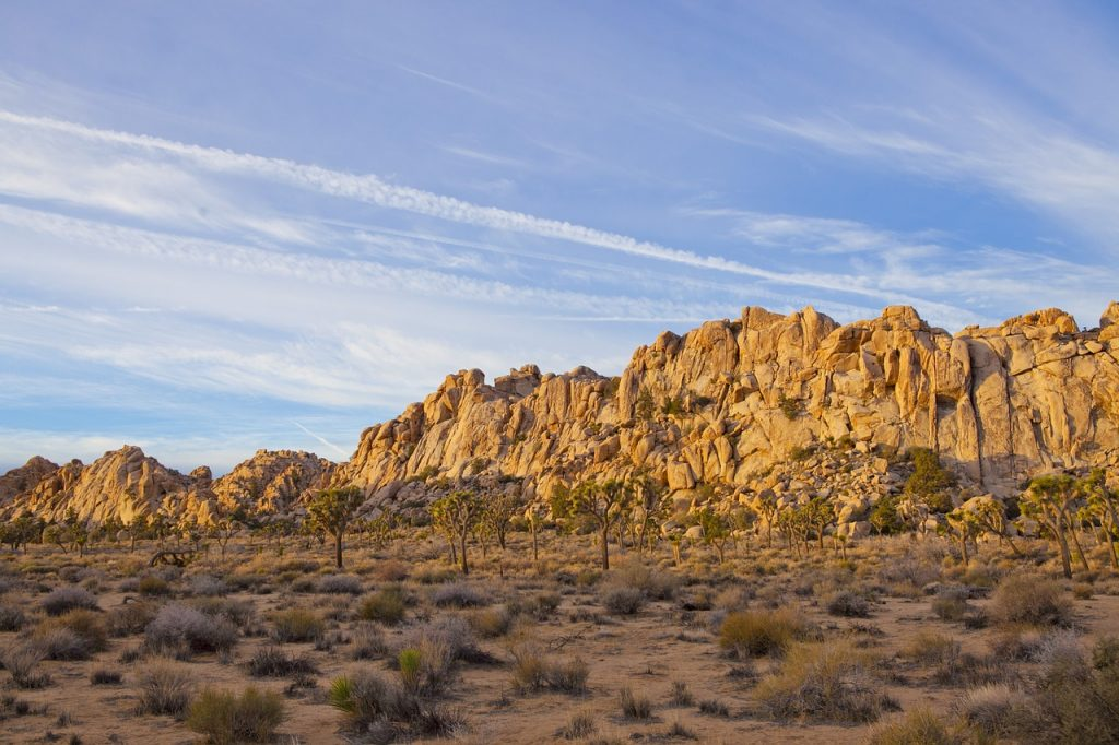 visitors guide to joshua tree national park