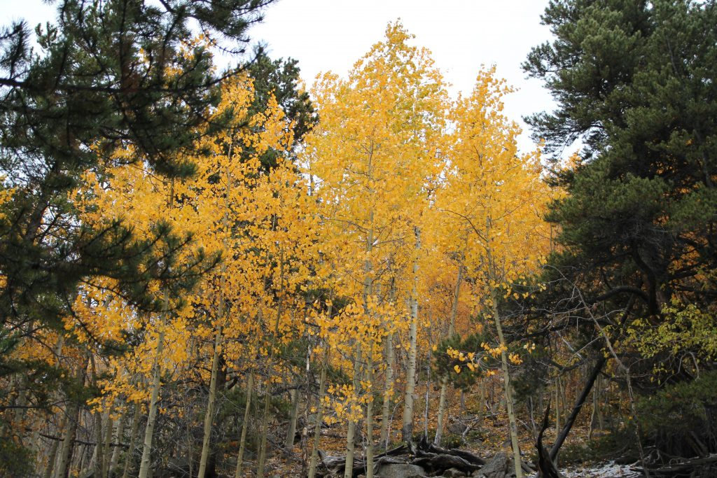 hikes in evergreen CO