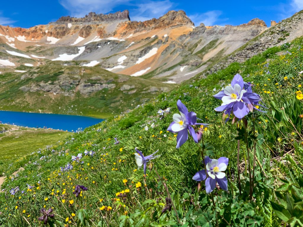 Wildflowers along the hiking trails in Ice Lake outside of Ouray.