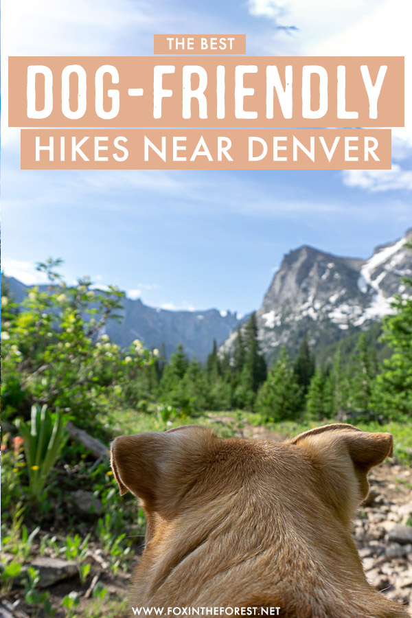 Want to take your dog on a hike? There are so many dog-friendly hikes in Denver for a fun day trip with your pup! Here's a round up of the best hikes for your dog in Colorado!