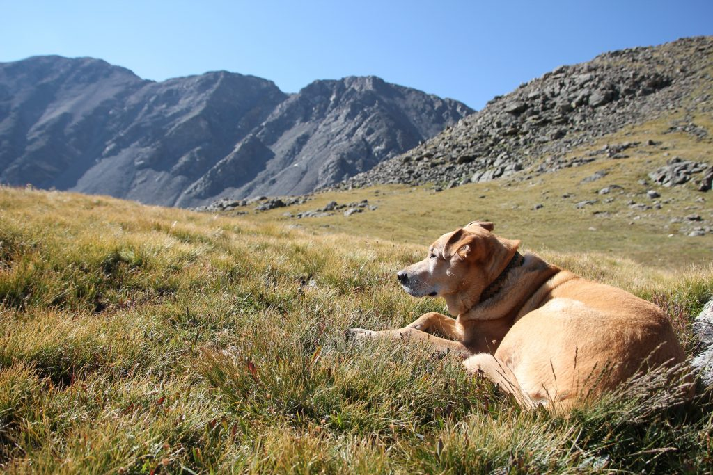 grays and torreys peak dog friendly