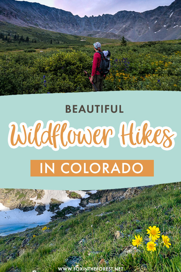 Visiting Colorado in the summer is amazing because... wildflowers! If you're keen to see wildflowers in Colorado this summer, here are the top wildflower hikes in CO that guarantee beautiful sights!