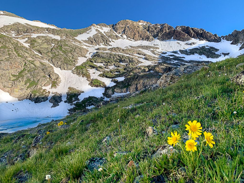 wildflower hikes colorado