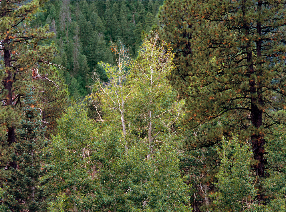 Hikes in Durango